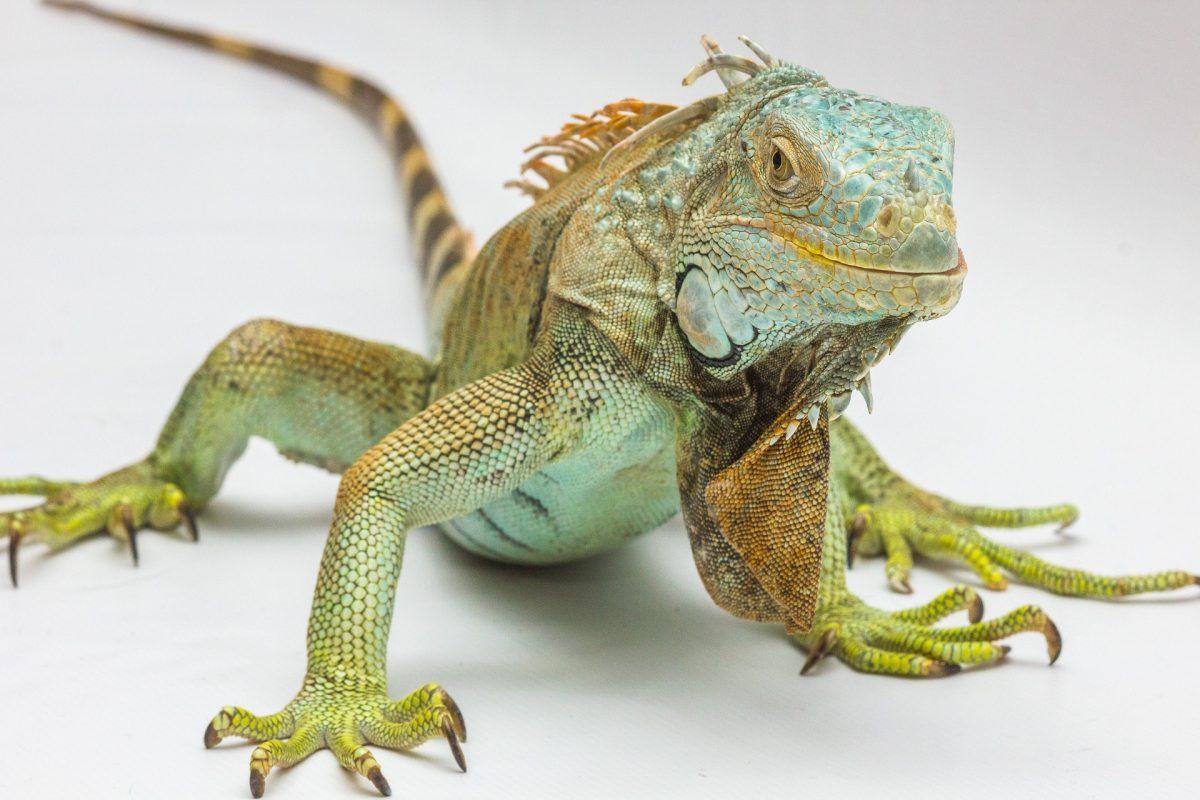 Reptile Guy